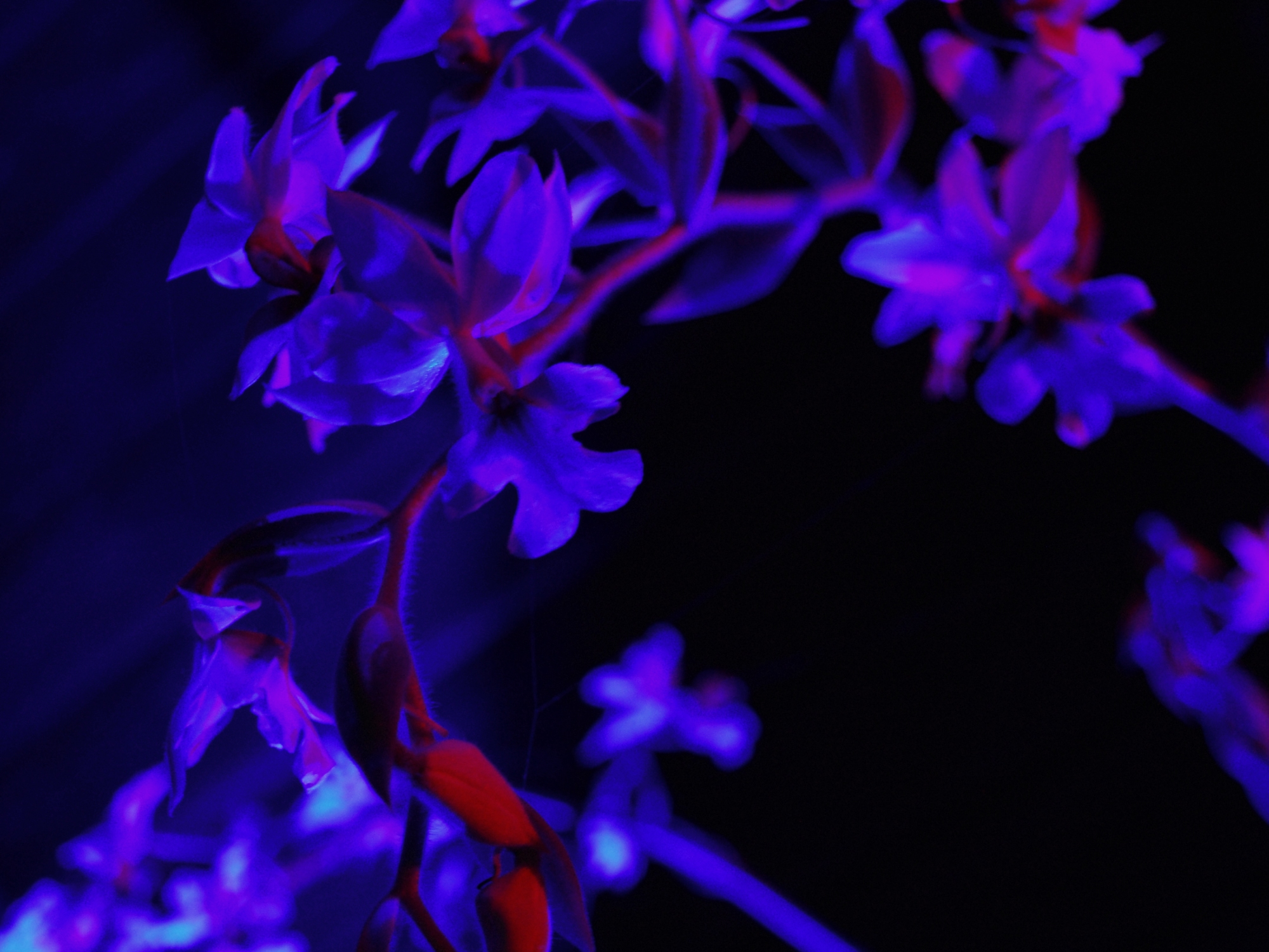 Strange Light Orchid