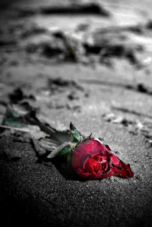 Some Rose II