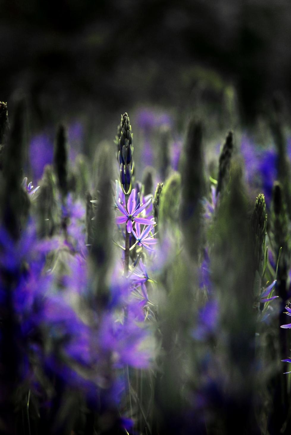 Spectral Garden