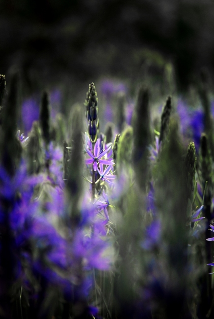 Spectral GardenS
