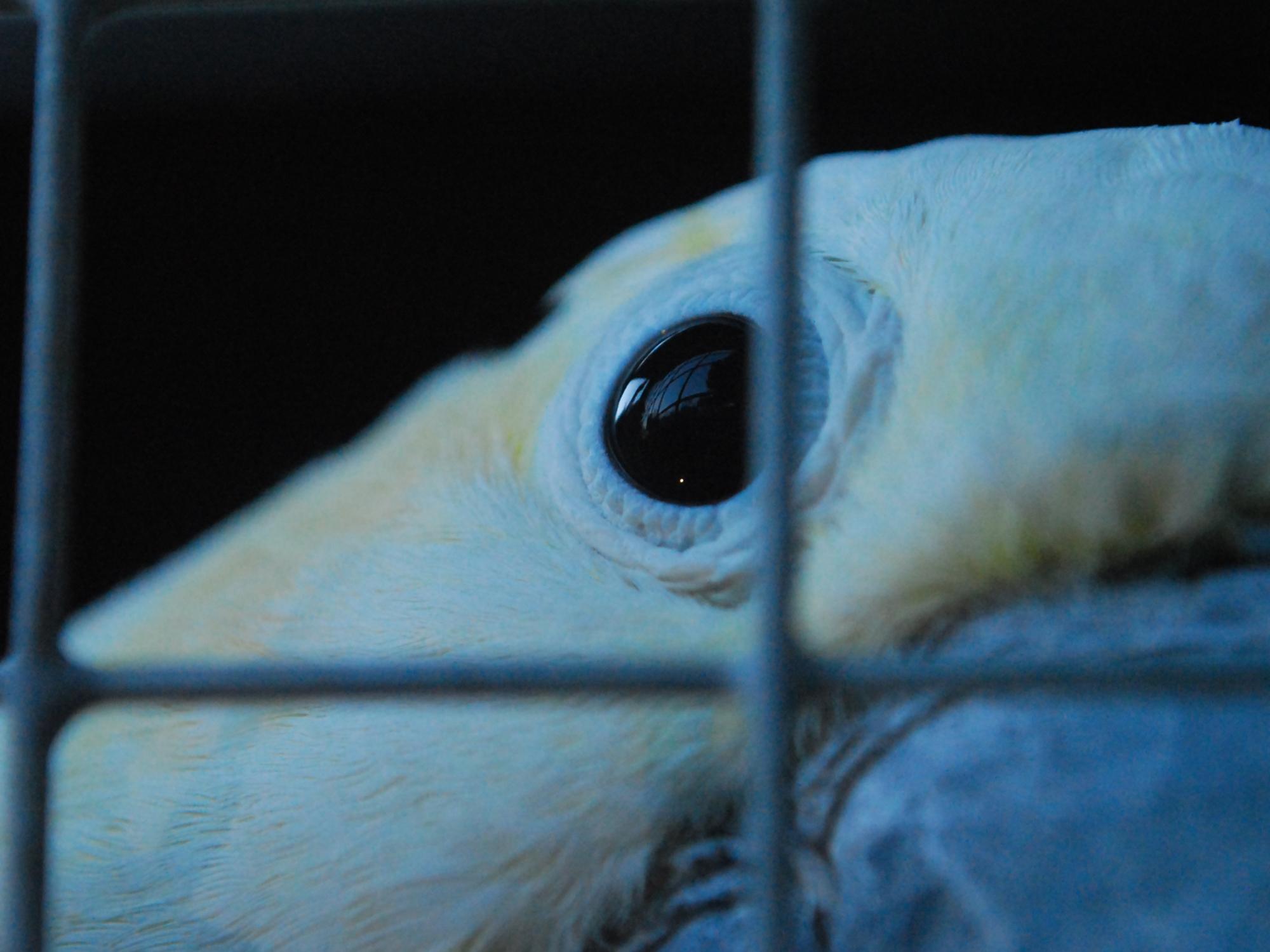 Jailbird II